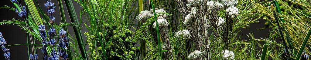 Стабилизированные растения - травы и соцветия