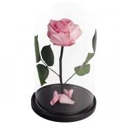 RSGK/2420 Роза в колбе розового цвета