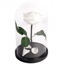 RSGK/2000 Роза в колбе белого цвета