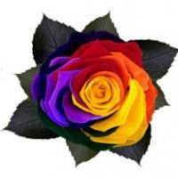 Головки роз Kiara